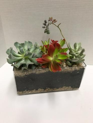 Succulents in a glass rectangle